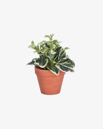 Τεχνητό φυτό Aucuba