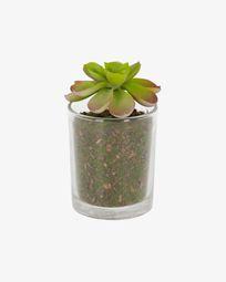 Τεχνητό φυτό Aeonium