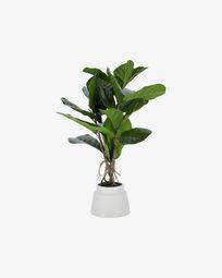 Διακοσμητικό φυτό Lyrata 60 εκ